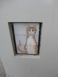 Cat on a wall