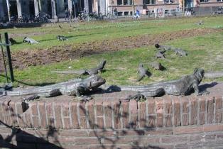 Iguanas everwhere!