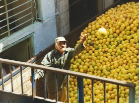 Havana 1999