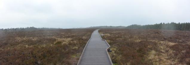 Langlands Moss