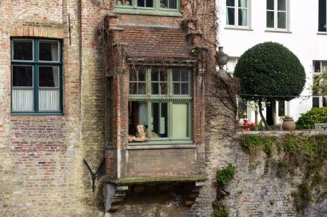 The Bruges dog