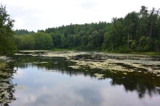 Otter Lake