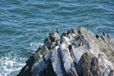 Seabirds