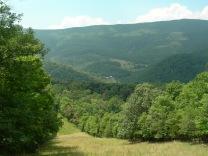 South Branch Loop Trail