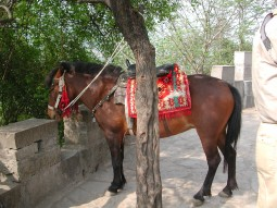 Horse at White Emperor City