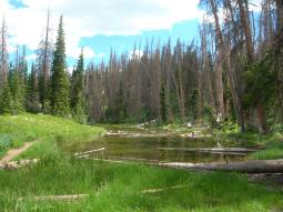 Cedar Breaks meadows