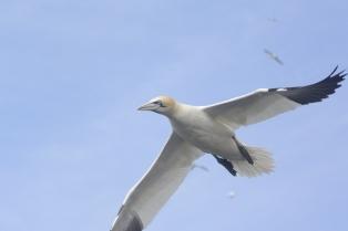 Seabird Seafari