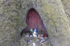 Fairy house?