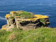 Sea stack with flower garden