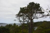 View of Loch Ewe