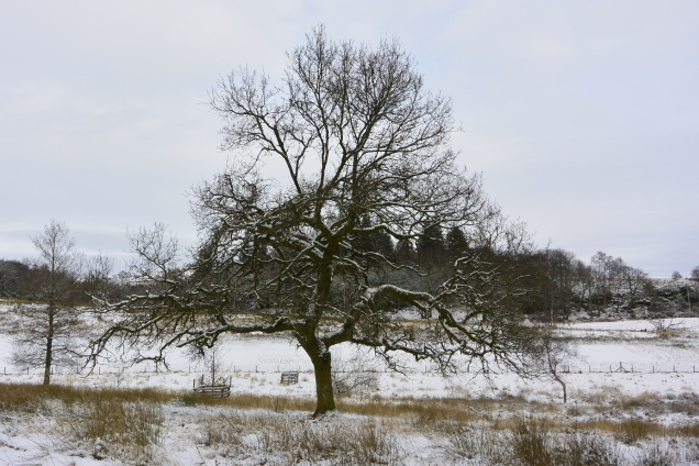 Craigend Field