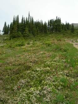 Cavell Meadows trail