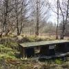 Cashel Forest