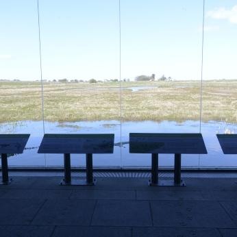 Window on Wild Lindisfarne