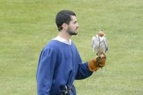 Falconry display