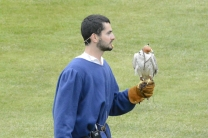 Falconry display