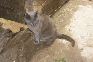 Auchindrain cat