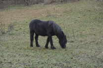 Horses near Doune Castle