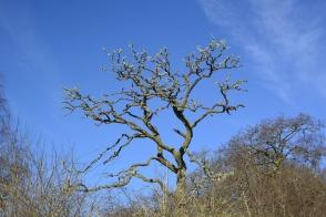 On Lendrick Hill