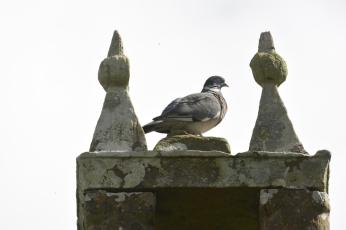 Bird on church roof