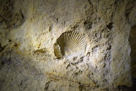 Fossil, Pál-völgyi Cave