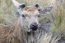 Red Deer Range