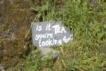 Is it tea your looking for?