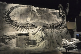Royal Tyrrell Museum of Palaeontology