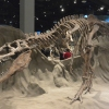 Royal Tyrrell Museum ofPalaeontology