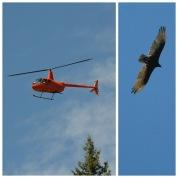 Overhead at Horseshoe Canyon
