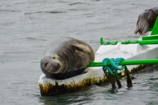 Seals on buoy