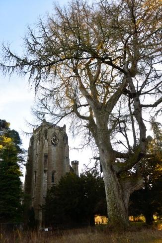 Dunkeld Mother Tree
