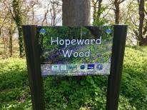 Hopeward Wood
