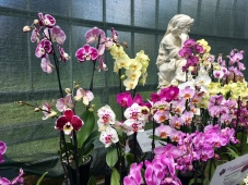 Glasgow Orchid Fair