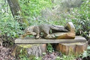 Woodland Walk: Otter