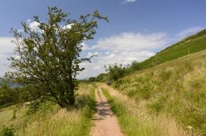 Greenock Cut