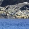 Seals on Orsay