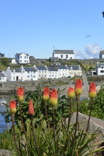 Looking back to Portnahaven