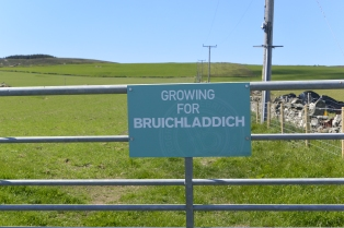 Growing for Bruichladdich