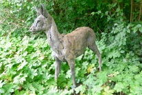 Roe Deer by Hamish Mackie, bronze, 2013.