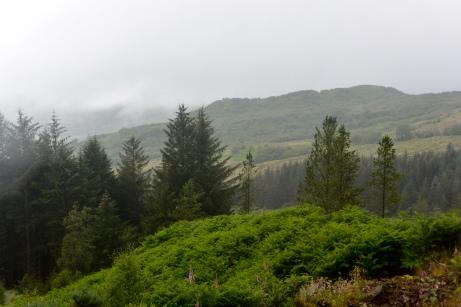 Balmacara forest walk