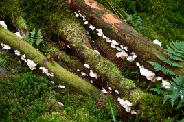 Fungi in Carrick Forest