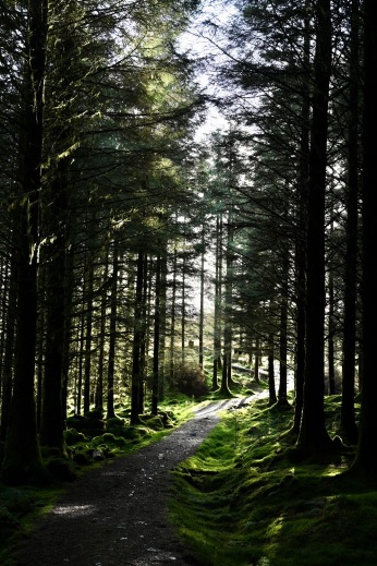 Carrick Forest