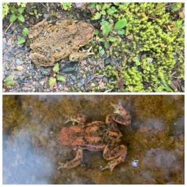 Frogs / toads?