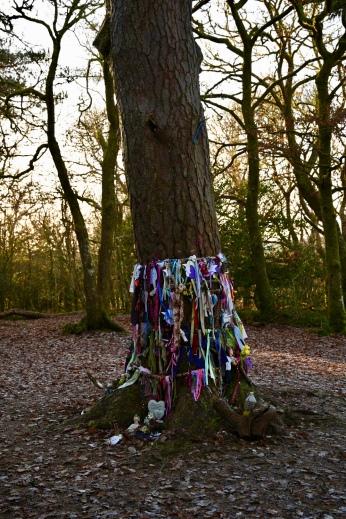 Summit pine tree, Doon Hill