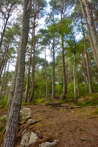 Lochalsh Woodland Walks