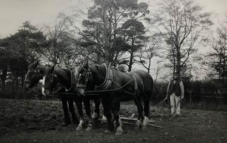 Horses and grubber c1890, unknown