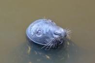Eyemouth seal