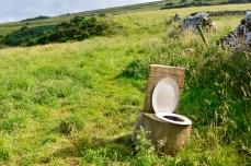 Stray toilet