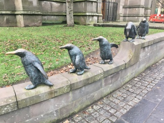 Dundee penguins